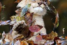 FUNNY ANIMAL  PICS / Any Animals love and FUNNY