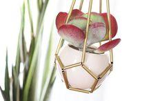 DIY-Inspiration mit Pflanzen