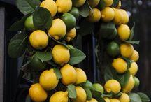 lemons / by Jacqueline Girouard