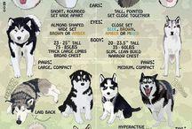 Dogs goals