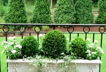 Gardening: Containers/Terrariums/Cloche