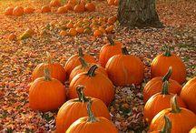 Perfectly Pumpkin
