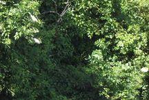 Regards sur la nature / Un bosquet, un champs, une fleur, un arbre, tout ce qui procède de la nature est beau, paisible. J'essaie de relier cette contemplation de la nature à la poésie.