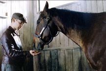 Caballos de Película / ¿Quieres saber más acerca de películas de caballos? Conoce las historias más impactantes de la gran pantalla protagonizadas por caballos.