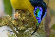 Humming Love / Hummingbirds / by Amber Samartin