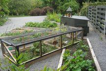 Garden- Chickens and ducks
