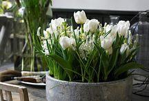 DIY: Spring flower ideas