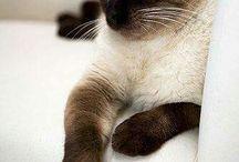 Кошики