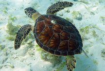 and turtles love turtles!!!