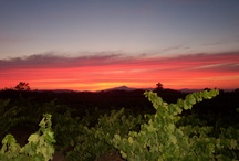 Sonoma county - Favorite Places & Things To Do / Favorite places for wine lovers