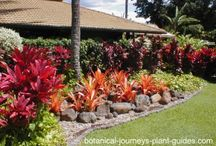 Avanti Landscaping & lighting / I am on http://www.gulfharborslife.com/modules.php?name=Content&pa=showpage&pid=13