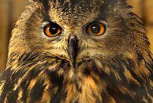 Animals / Animales que me fascinan