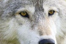 Critters___Wildlife / Mostly woodland animals