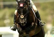 Everything Equine / Equestrian Sport