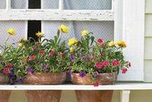 Gardening / by Abby Bruce