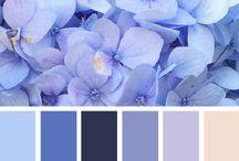 cartela e cores