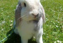 Rabbits / My lovely rabbits