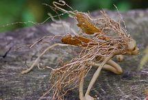 Wortel elfjes/Root fairys