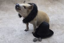 Pet Fashion Tips / Here you can find tips to dress your pet buddy! And all the tips are approved by me, Jamon!