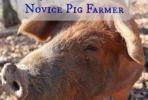 Pigs on the Homestead