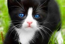 Ojos azules / Cat