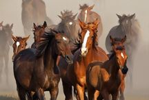 Horses/koně