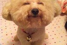 bichons / dogs rule!!!