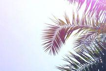 Pálmafák