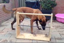 Dog enrichment / Ideas for making your dog's life more fun and rewarding. Games, nosework, toys--you name it!