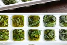herbs / by Kelly Vance