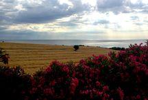 Marche landscape