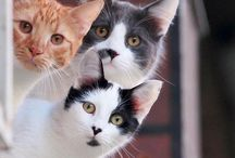 Cats - part 5