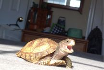 TURTLES ARE MY FAVES / by Erica Knowles