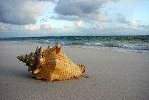 Ocean Sea Beach Shells . . .