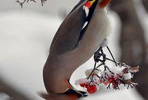 Birders Pick / by Wayne Rost