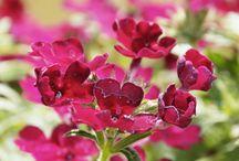 Saját fotó, saját virág