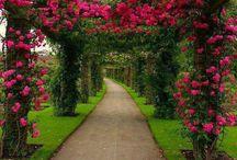 Jardim e criação