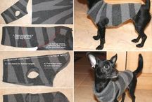 Psy-ubrania, obroże, legowiska