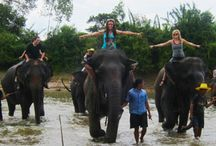 Thailand Gap Year Experience Tour / If you are looking gap year volunteering projects and opportunities, join an Ultimate Thailand Experience program to explore the Thailand during your gap year and volunteering travel.  http://www.volunteeringsolutions.com/thailand/volunteer/ultimate-thailand-experience / by Volunteering Solutions