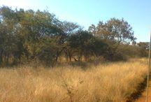 Wildlife @ Thaba Khaya / The love for all living creatures is the most noble attribute of man ~ Charles Darwin