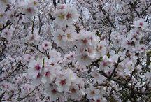 Spring in Portugal