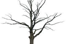 표현 나무
