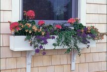 Walpole Outdoors Window Boxes / Walpole window boxes provide the encouragement your garden needs to expand in new directions, bringing color under windows and enhancing your outdoor area. We offer a wide range of styles in several sizes in wood and low maintenance solid cellular vinyl. Each window box has two drainage holes and comes with mounting brackets.