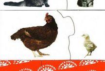 zwierzęta i ich potomstwo