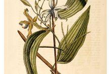 Botanical / by Thomas Gaskin