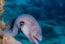podmořský svět / ryby,korály,prostě podmořský tvorové