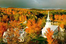 fall foliage / by Albert Maruggi