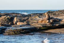 Galápagos - Wonder-full Islands