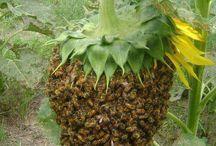 Ze života včel