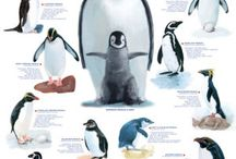 Arctic Animals / by Susan Cooper